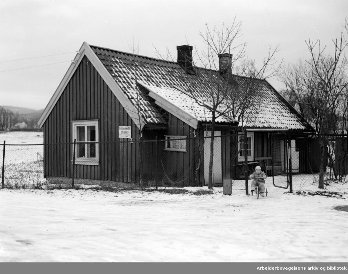 """Volvat. """"Grindastua"""". November 1953"""