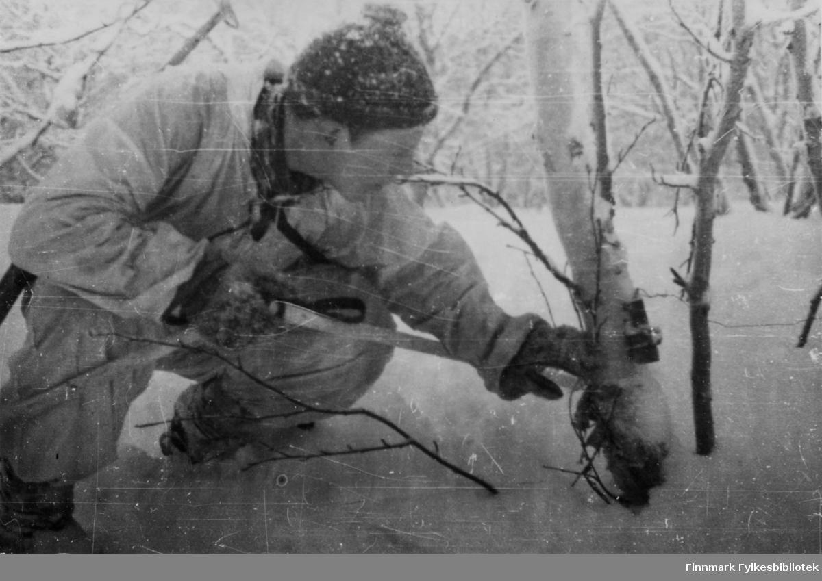 """Hele Finnmark var minelagt av tyskerne. Her viser en norsk soldat en militær felle: en sprengladning festet med en snubletråd mellom to trær. Om dette er en tysk felle er usikkert.  Bildeserien """"Frigjøringen av Finnmark 1944-45"""" viser et unikt materiale fotografert av soldater i Den Norske Brigade, 2. Bergkompani under deres oppdrag """"Frigjøringen av Finnmark"""" som kom i stand under dekknavn """"Øvelse Crofter"""". Fakta rundt dette bildematerialet illustrerer iflg. vår informant, George Bratli: """"2.Bergkompani, tilhørende Den Norske Brigade i Skottland,  reiste fra Skottland 30. oktober 1944 med krysseren «Berwick» til Scapa Flow på Orkenøyene for å slutte seg til en større konvoi som skulle være med til Norge. Om bord på andre skip var det mange russiske krigsfanger som hadde vært på tysk side og som nå ble sendt hjem.  2.Bergkompani forlot havn 1.november 1944 og kom til Murmansk, Sovjetunionen, 6. november 1944.  De ble her lastet om og fraktet til Petsamo, Sovjetunionen, hvor de ankommer 11.november 1944.  Kompaniet reiser så til Sandnes utenfor Kirkenes og blir forlagt der frem til 26.november 1944. De flytter så videre til Skipparggura.  Den 29.november reiser deler an kompaniet til Rustefielbma og Smalfjord og noen drar opp på Ifjordfjellet.   17. desember ankommer resten av kompaniet til Smalfjord. 30.desember blir en avdeling sendt til Hopseide og 8. januar 1945 blir noen sendt til Kunes. Den 14. januar er kompaniet delt og ligger i Kunes, Kjæs, Børselv, Hopseide og Smalfjord. 5. februar 1945 blir 3.tropp sendt over Porsangerfjorden for å operere i Olderfjorden. Her var de i kamp og hadde tap i  Billefjord og Sortvik. 8.mars 1945 kom noen til Renøy og 12. mars kom første del av kompaniet til Brennelv. 7.mai begynte kompaniet å bygge ny kai i Hambukt. 19. mai ble de som hadde falt begravd i Lakselv. 8. juni ble kompaniet flyttet fra Brennelv til Tromsø for så å bli sendt videre til Mo I Rana 16.juni."""""""