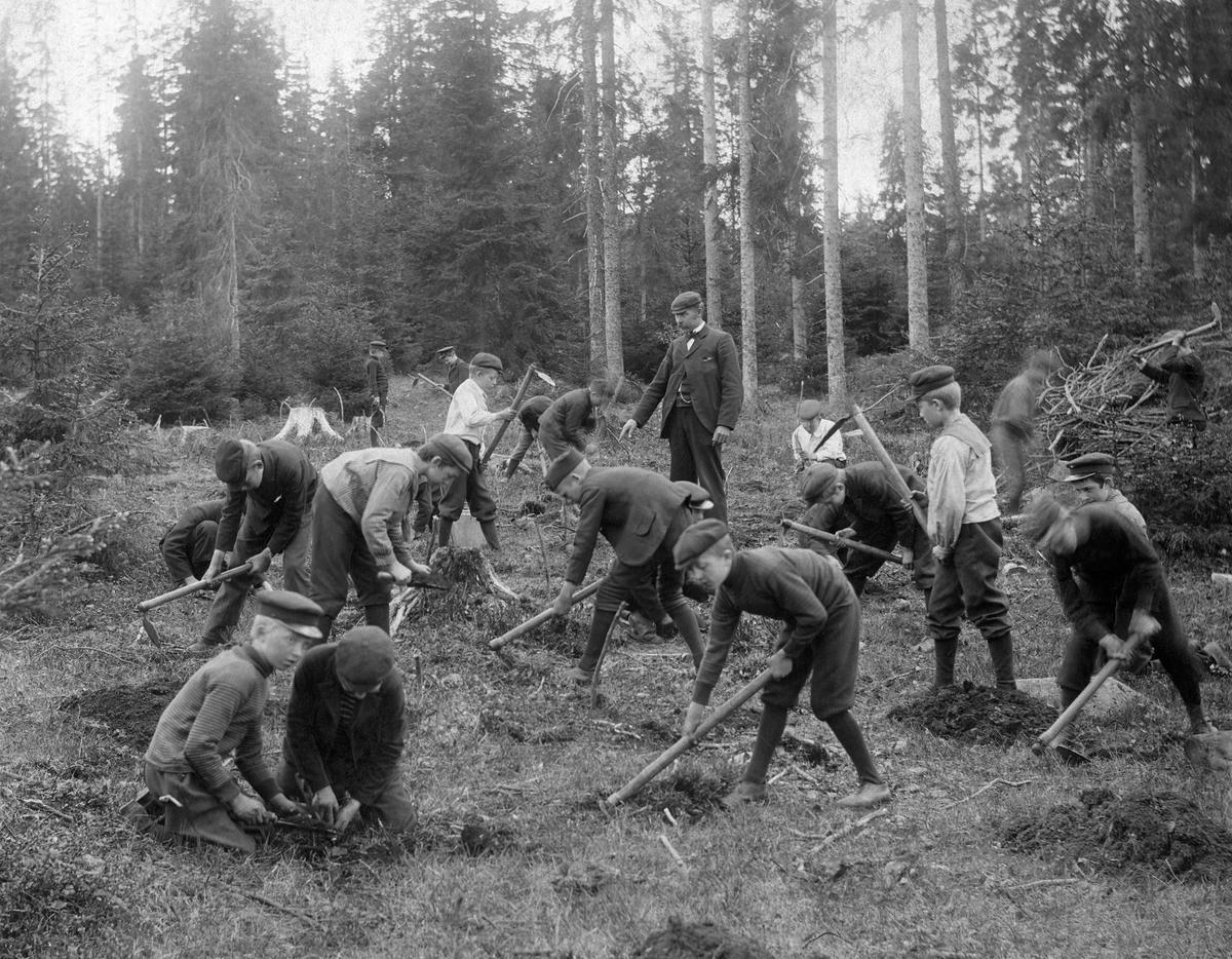 Bilde fra 1904 viser skolebarn i sving med plantehakker. (Foto/Photo)