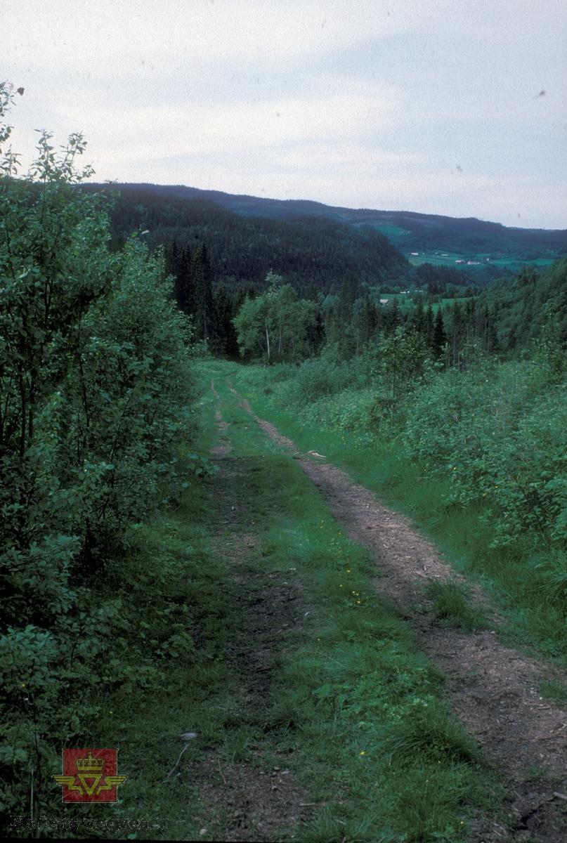 Parti av den gamle kongeveien mellom Korporals bru og Hov i Soknedal