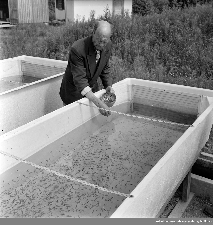 Bogstad. Utklekningsanlegget til Oslomarkas Fiskeadministrasjon. Bestyrer Torvald Ljungqvist. Juni 1962