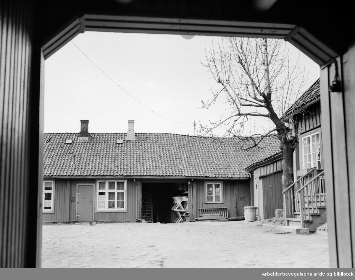 Biermannsgården (Maridalsveien 78). Mai 1953