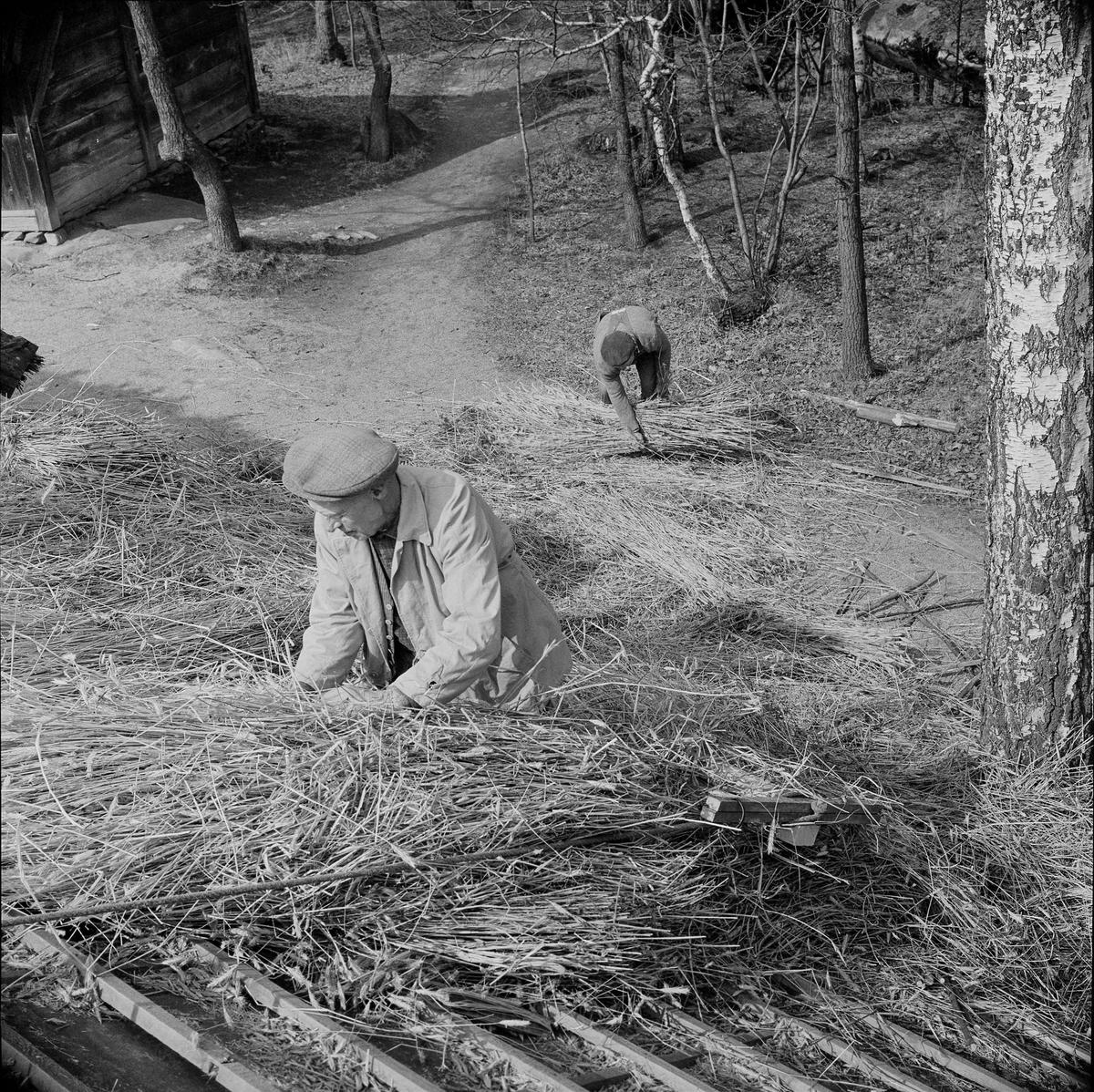 Halmtaksläggning Oktorpsgården, Skansen, 1965