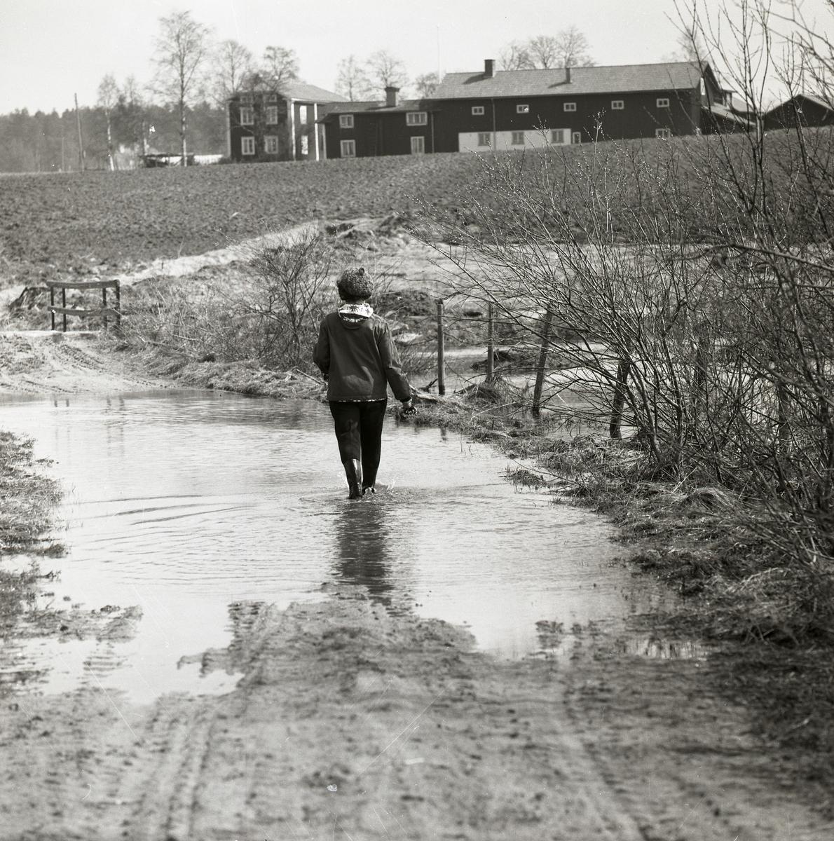 En person går genom vattnet på en översvämmad väg, 1968.