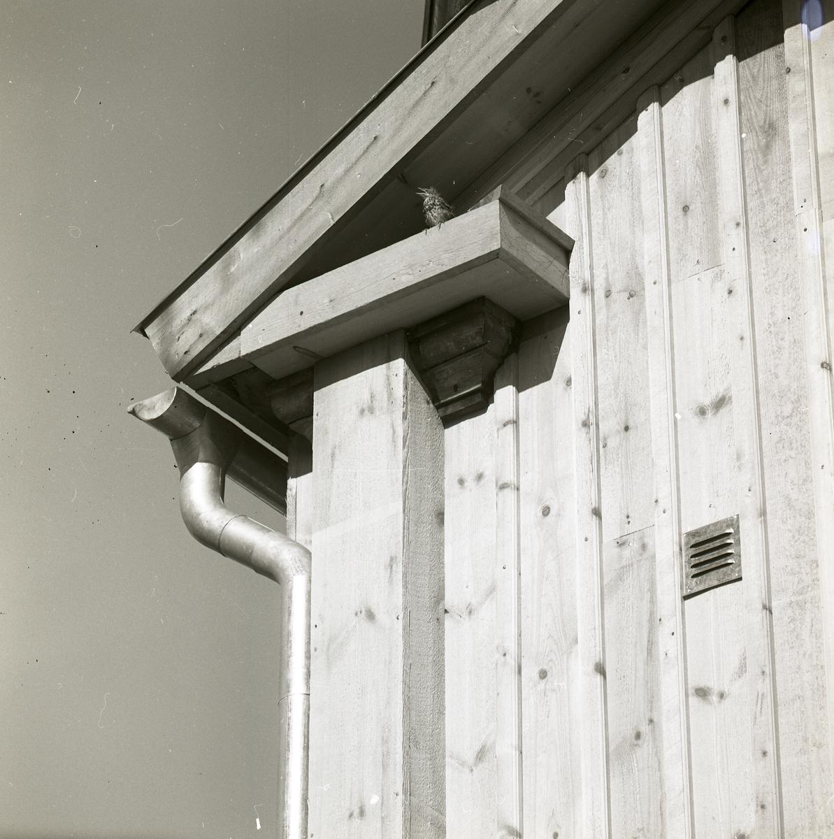 En fågel sitter under taknocken på ett hus, juni 1968.