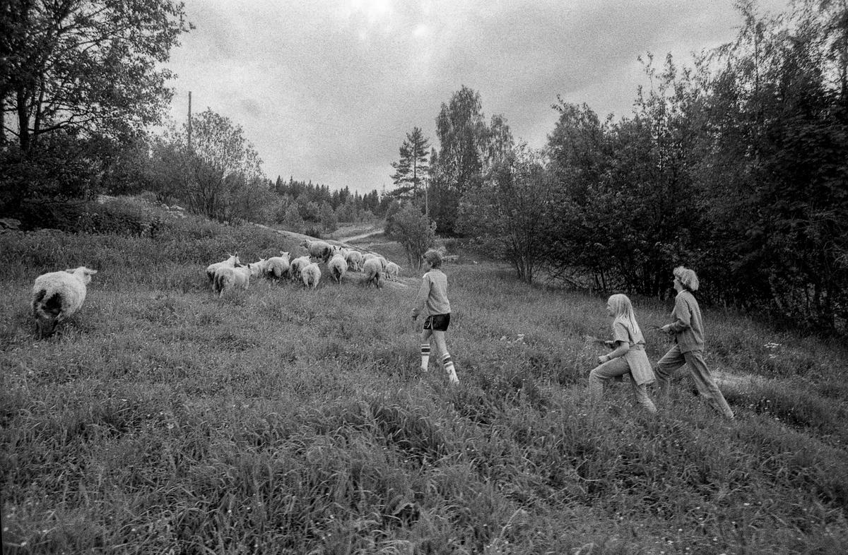 Oppegård menighet, sommerleier for barn og ungdom. Leker med sau. Spiser mat  i matsalen. Voksen og to barn jogger.