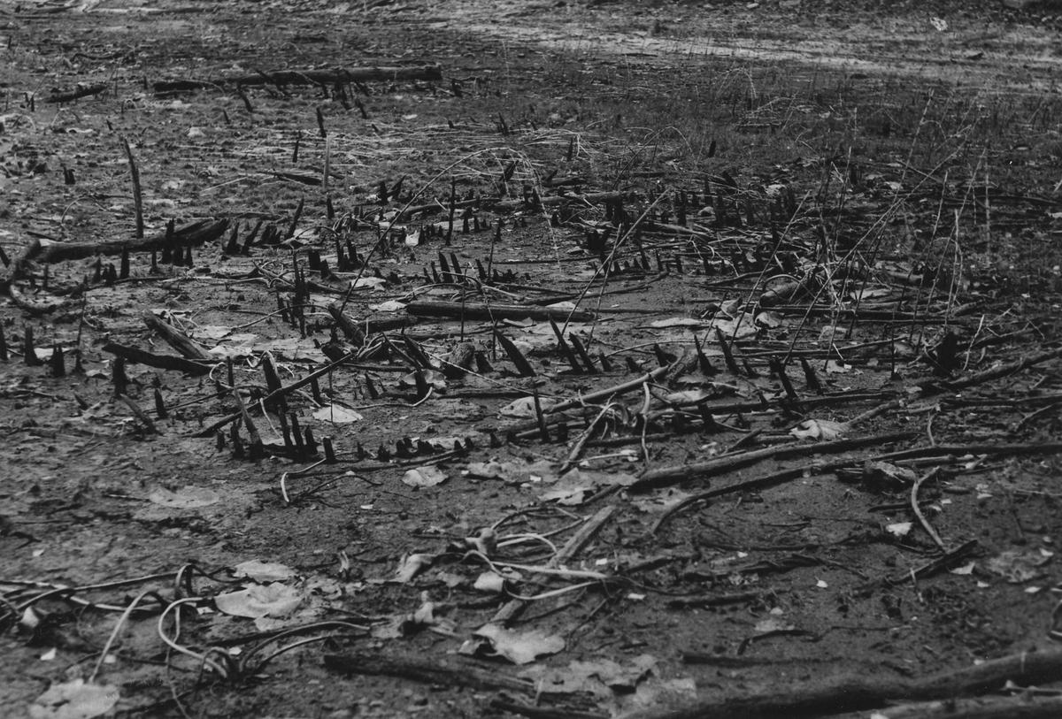 Katsa som blivit synlig i och med lågvatten på gården Sandvik vid Ömmern 3 november 1951.