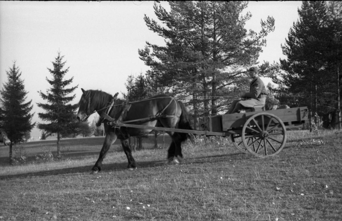Kjøring med hest og vogn, Hærens Hesteskole. Kusken er ikke identifisert.