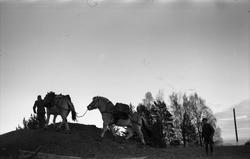 Ti bilder fra Hærens Hesteskole på Starum november 1955. Klø