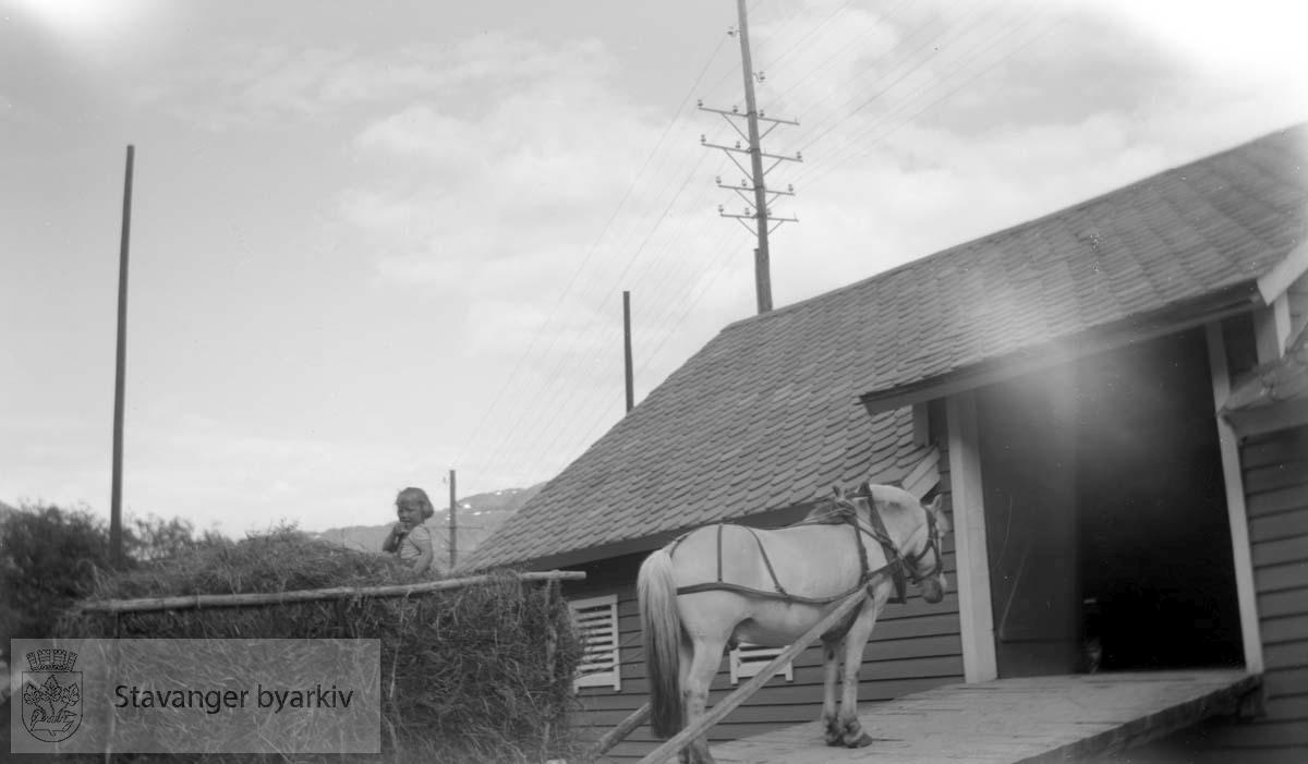 Hest på vei opp låvebru med høylass