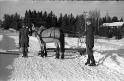 Seks bilder fra Hærens Hesteskole på Starum ca. årsskiftet 1