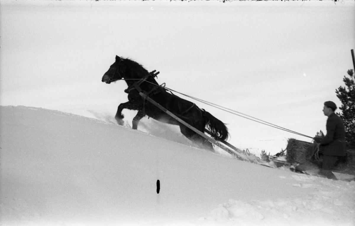 Seks bilder fra Hærens Hesteskole på Starum. Hesteekvipasje i snødekt terreng.