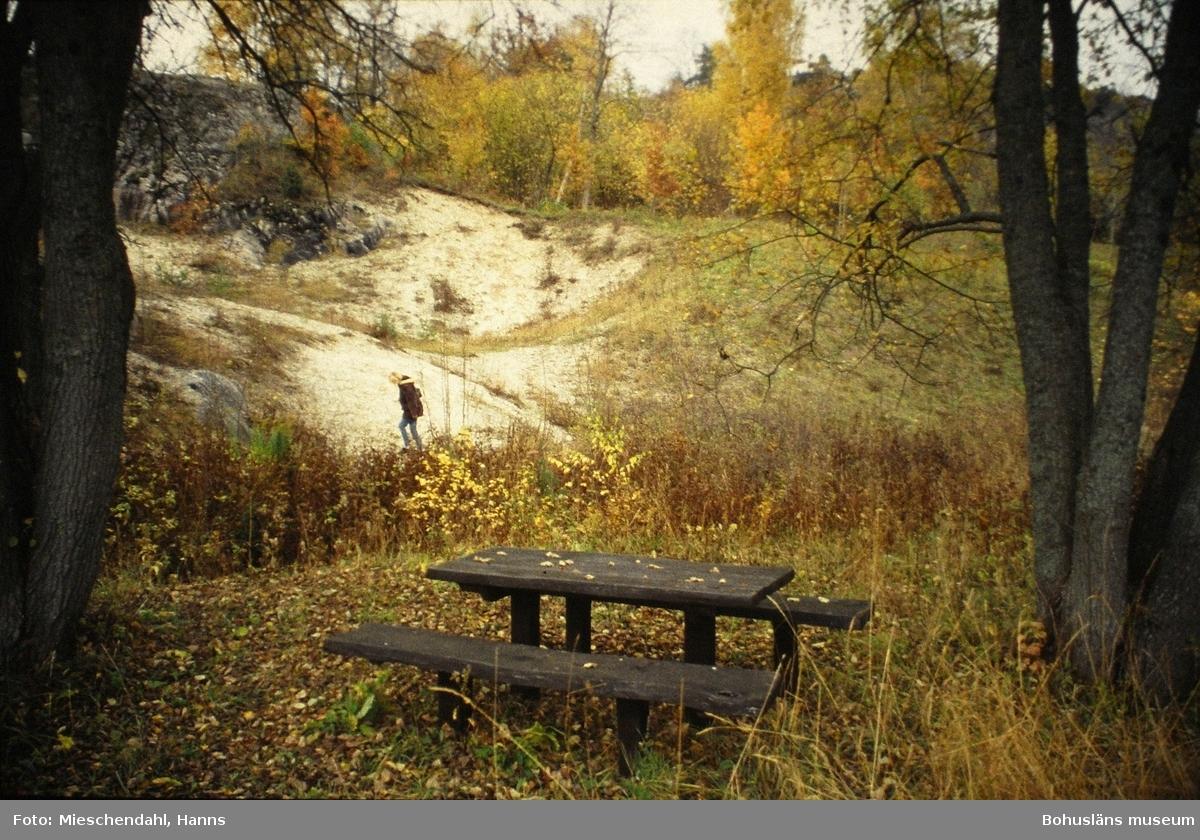 Skalbankarna på Kuröd, i förgrunden syns en bänk och i bakgrunden går en person på området som är vitt av skalen som ligger i dagen.