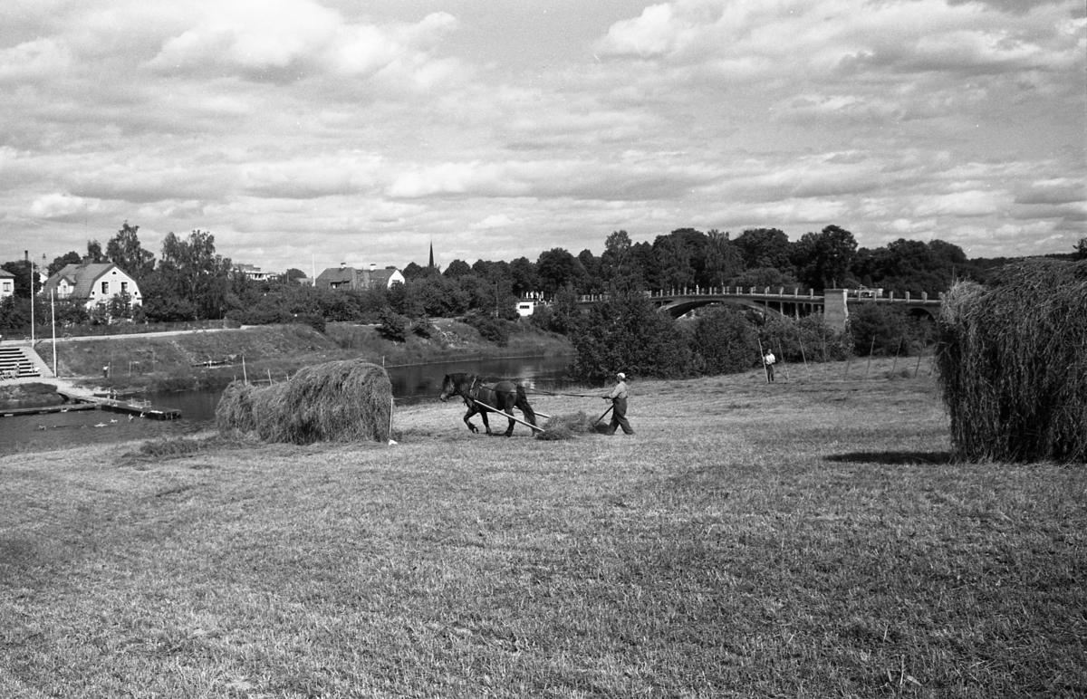 Höskörd på fältet sydväst om Västerbron. En man arbetar tillsammans med en häst. Två hässjor är klara. En man har satt upp störar till nästa höhässja. På andra sidan Arbogaån ses Villagatsbadet.