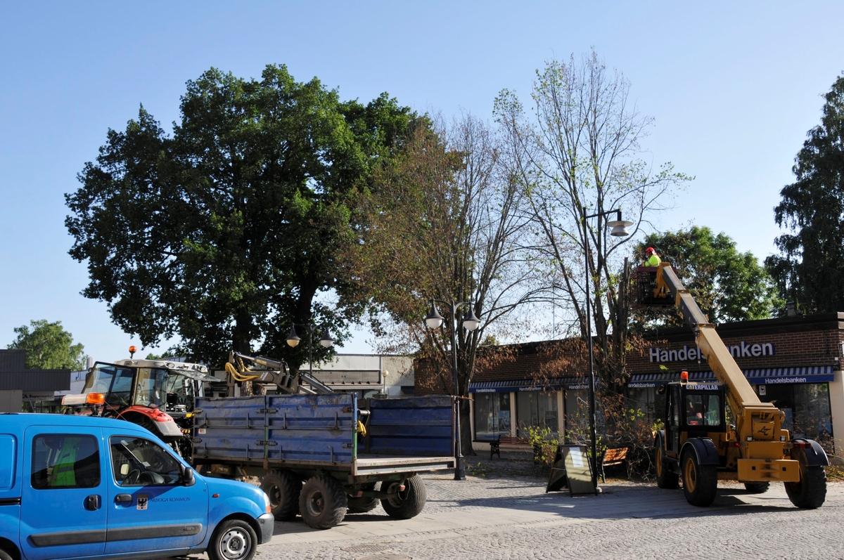 Trädfällning på Nytorget. Bil, traktor och vagn samt lyftkran.