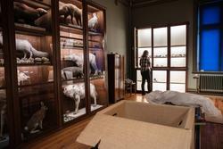 Vänersborgs museum, Nordiska djursalen. Dokumentation av arb
