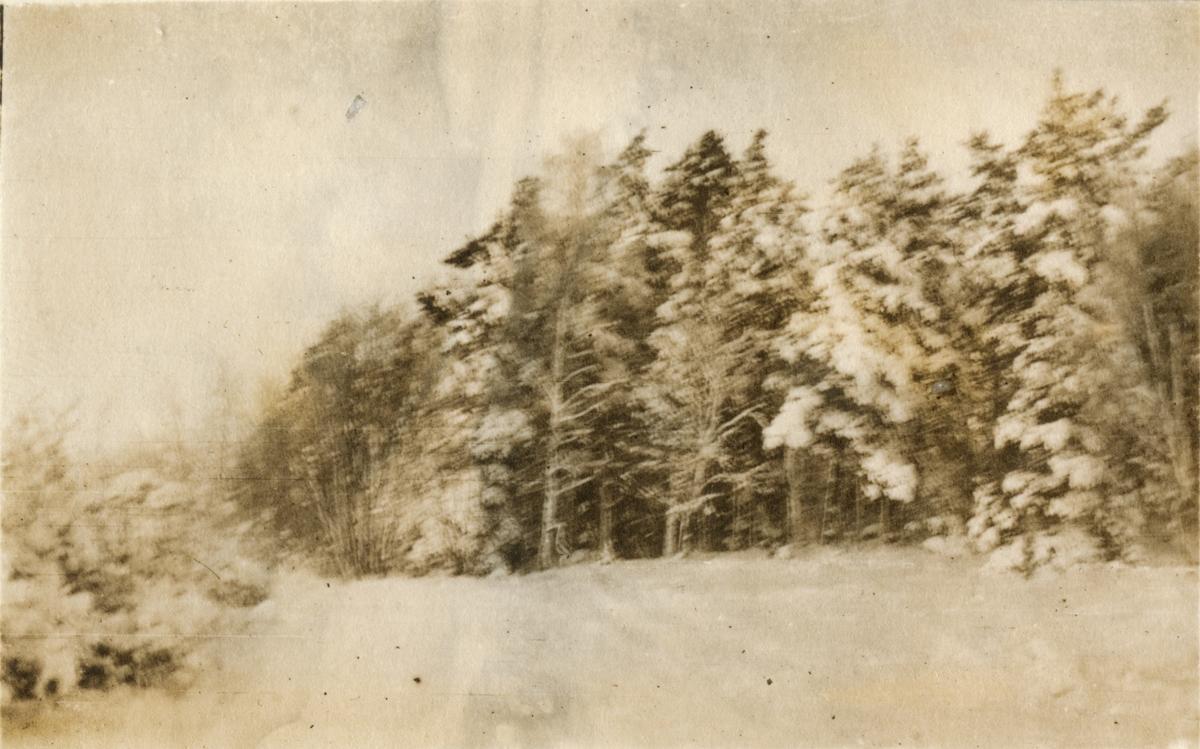 Vinterlandskap, fotografi tagit i samband med vinterövningar för elever på Krigsskolan Karlberg, troligen i Åre.