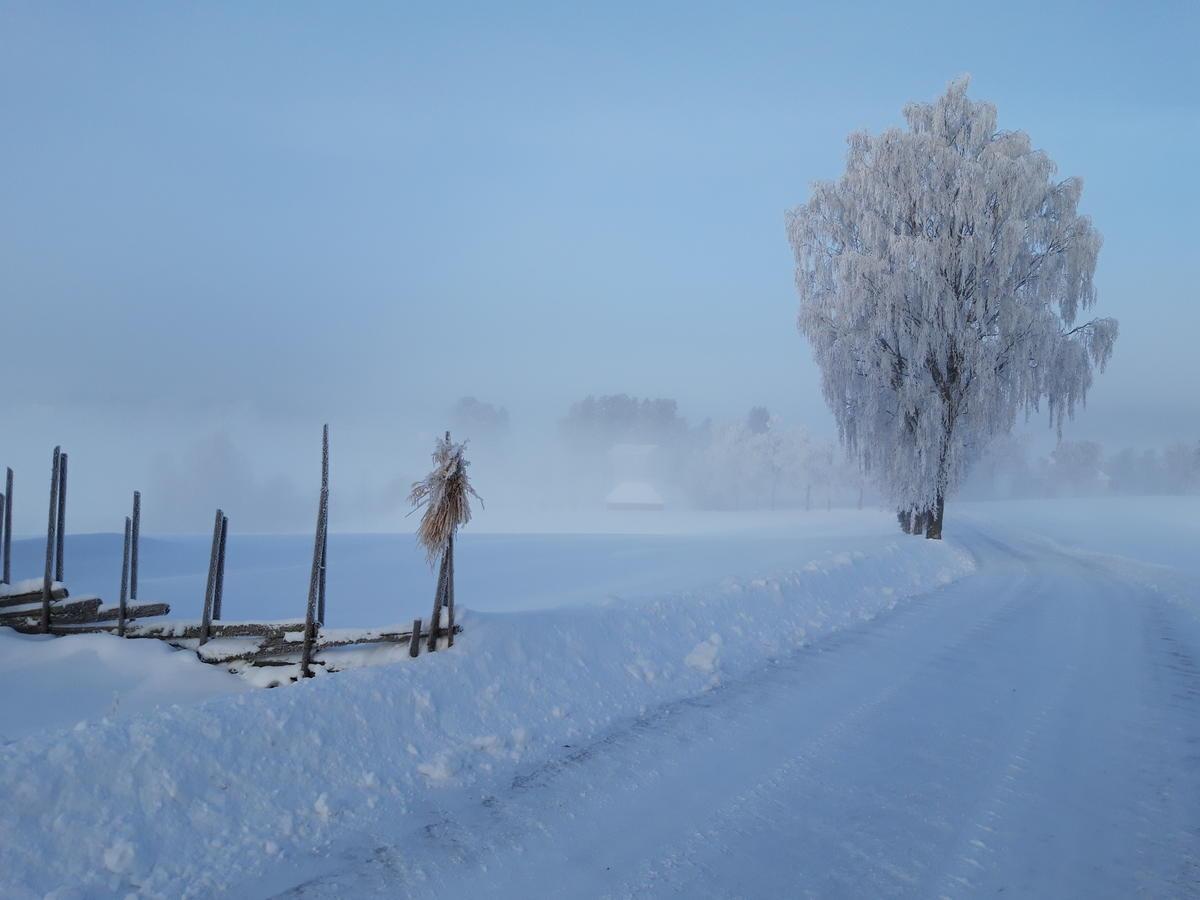 Vinter på Gamle Hvam