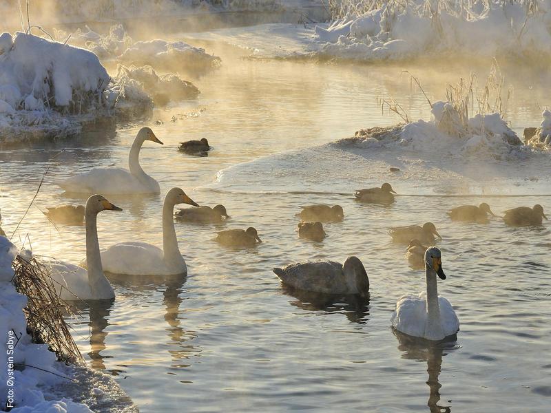 Vinterfugler_ystein_Sbye_nett.jpg (Foto/Photo)