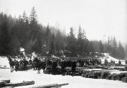 Tømmeropplag på Rambergevja i Tune. Oppsamling av tømmer fra