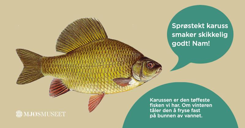 sesongen_2020_Eiktunet_fisk_Copy.jpg (Foto/Photo)