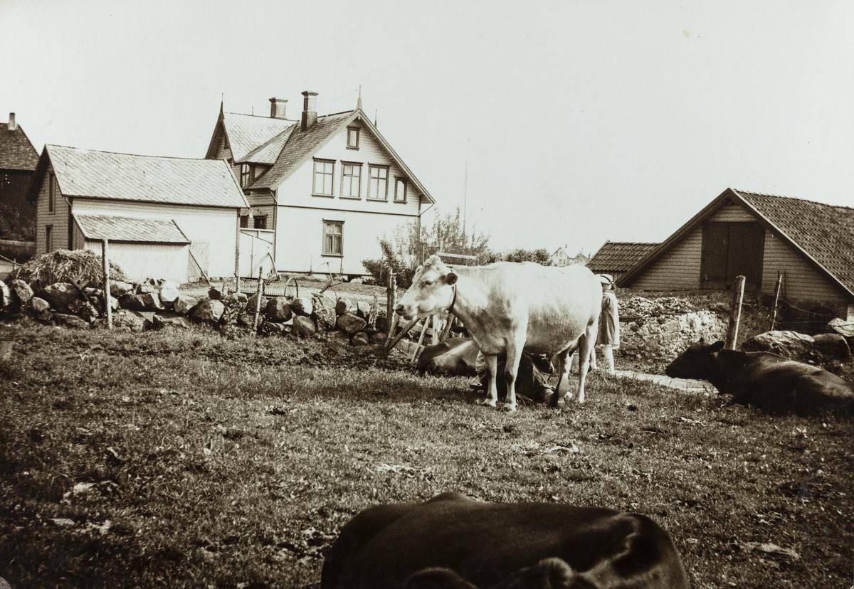 Parti fra Sørhaug sett mot sydvest, ca. 1938.