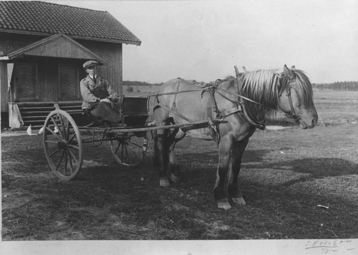 Asbjørn Simensen med hest og kjerre.