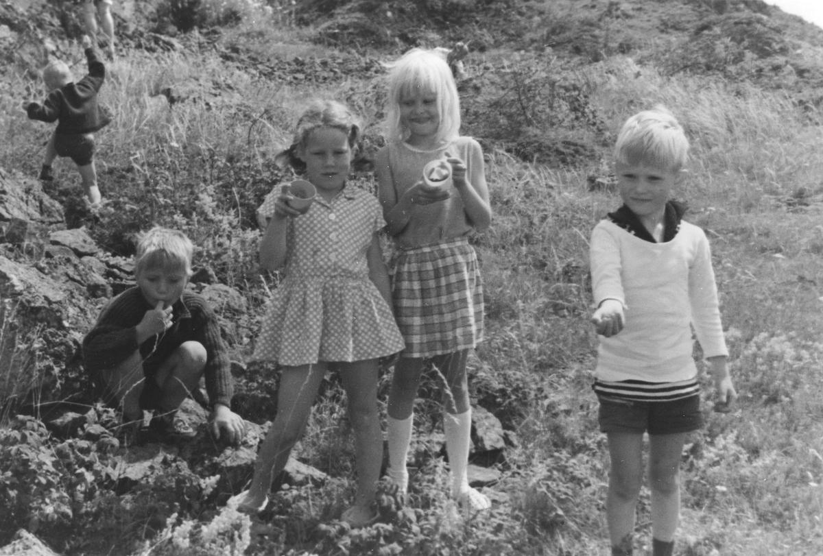 Fem barn plukker markjordbær.