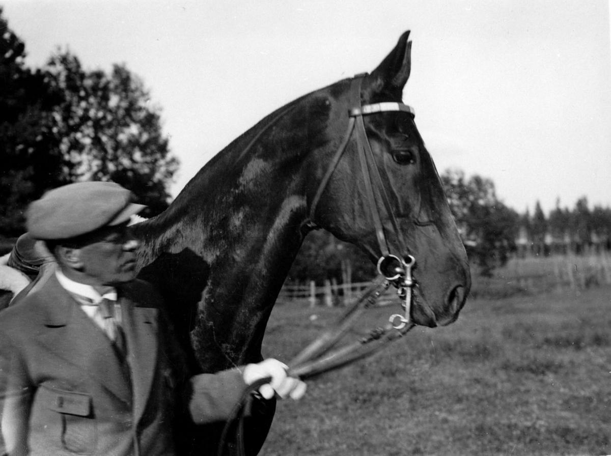 Hest og rytter på ridestevne.
