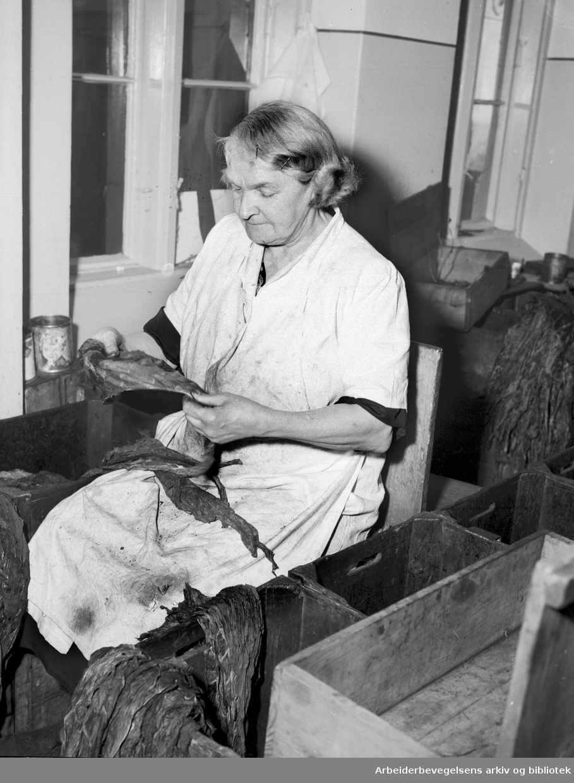 Tobakksarbeidere ved Langaard Tobakkfabrikk, .april 1954