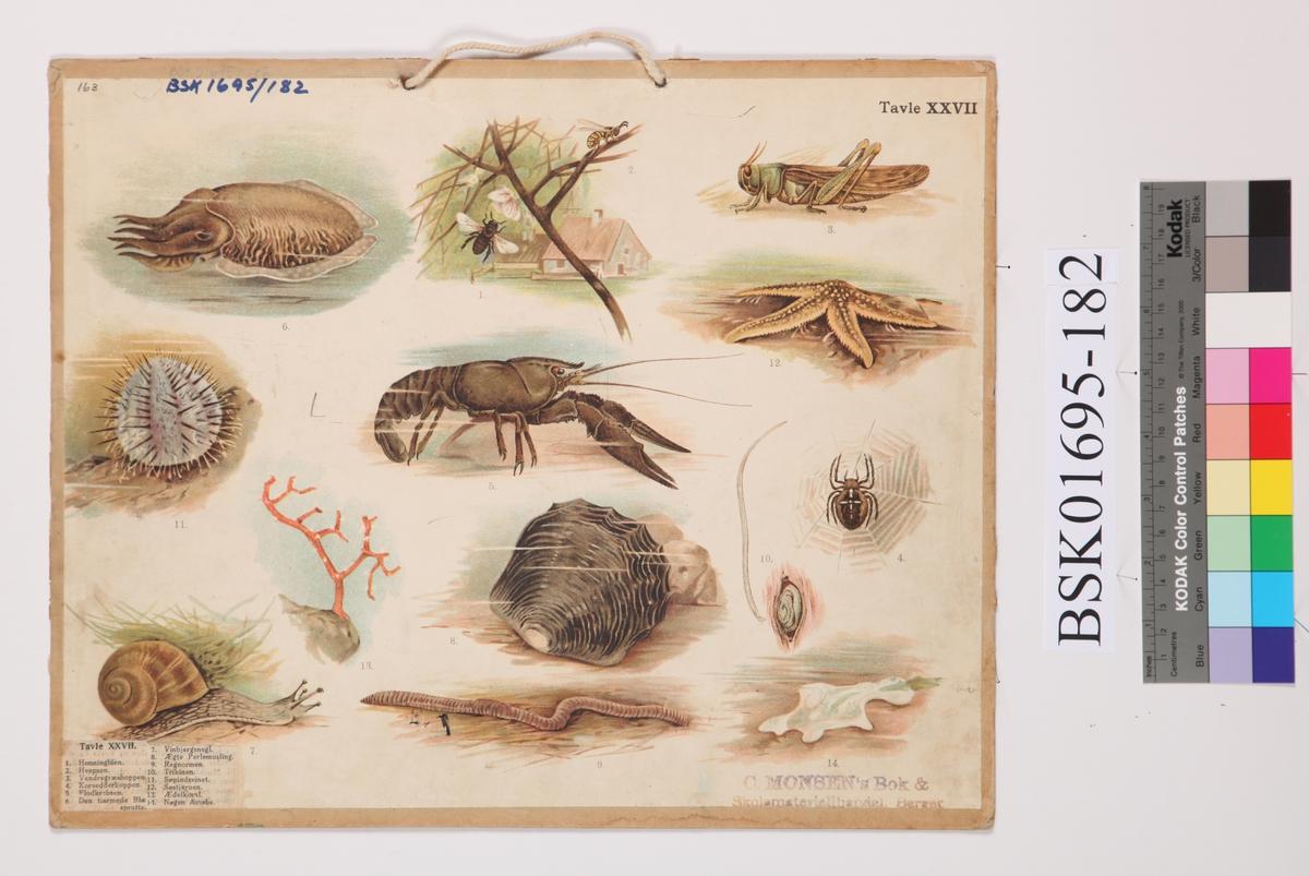 Tosidig skoleplansje. Tavle XXVI har belder av ulike sommerfugler og insekter. Tavle XXVII har bilder av ulike insekter, snegler og sjødyr.