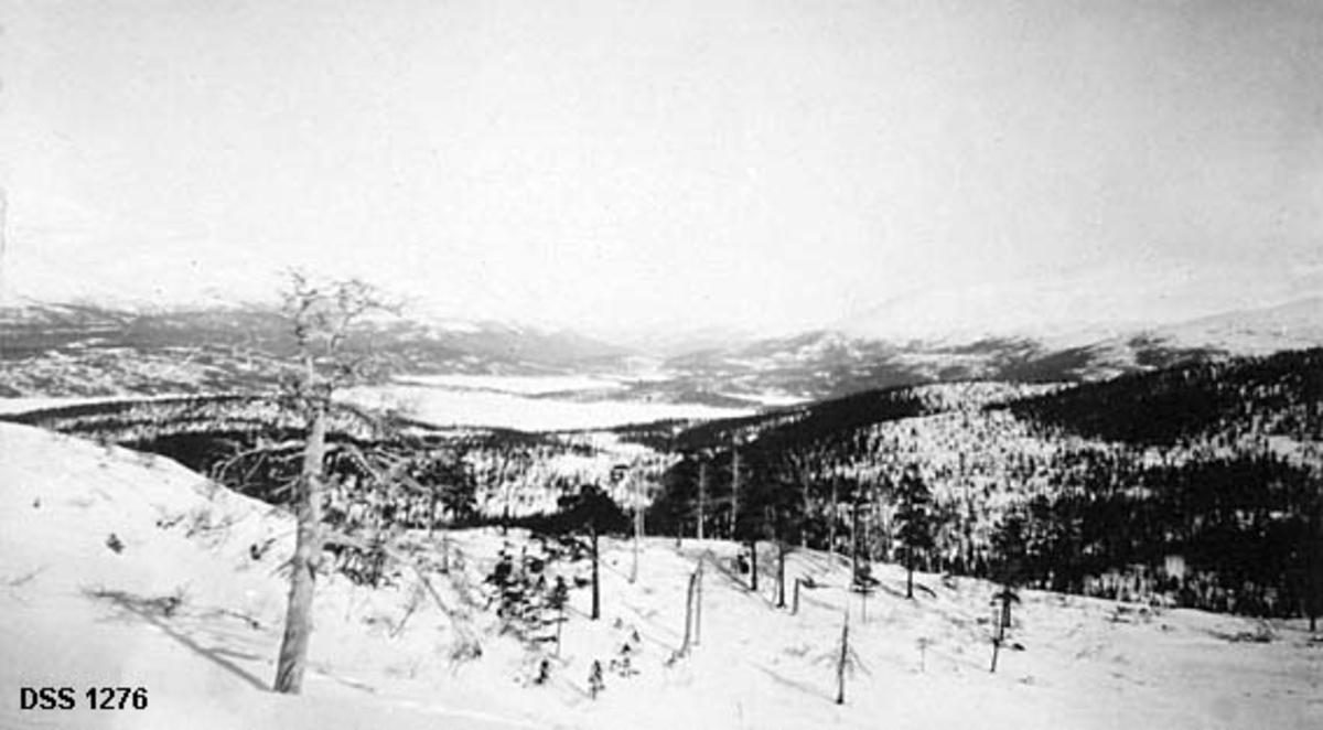 Landskapsfotografi fra Svenningdal i Grane på Helgeland.  Utsikt over snødekt landskap. Fotografiet er tatt fra en bakkekam der det står spredte furutrær, både gamle inntørkete og yngre og friskere.  Bakenfor ses en åsrygg med barskog i varierende tetthet.  Bakenfor der igjen et vatn med skog i liene omkring, men i de høyereliggende områdene er det snødekte, skogløse fjellrygger.