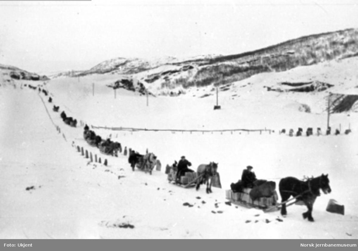 En lang rekke med hester og sleder i dynamittransport ved Kongsvoll; fjellstua i bakgrunnen