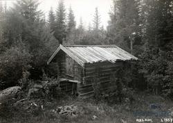 Funnisaga, Øvre Romerike, Nes, Akershus. Kjone i skogen.