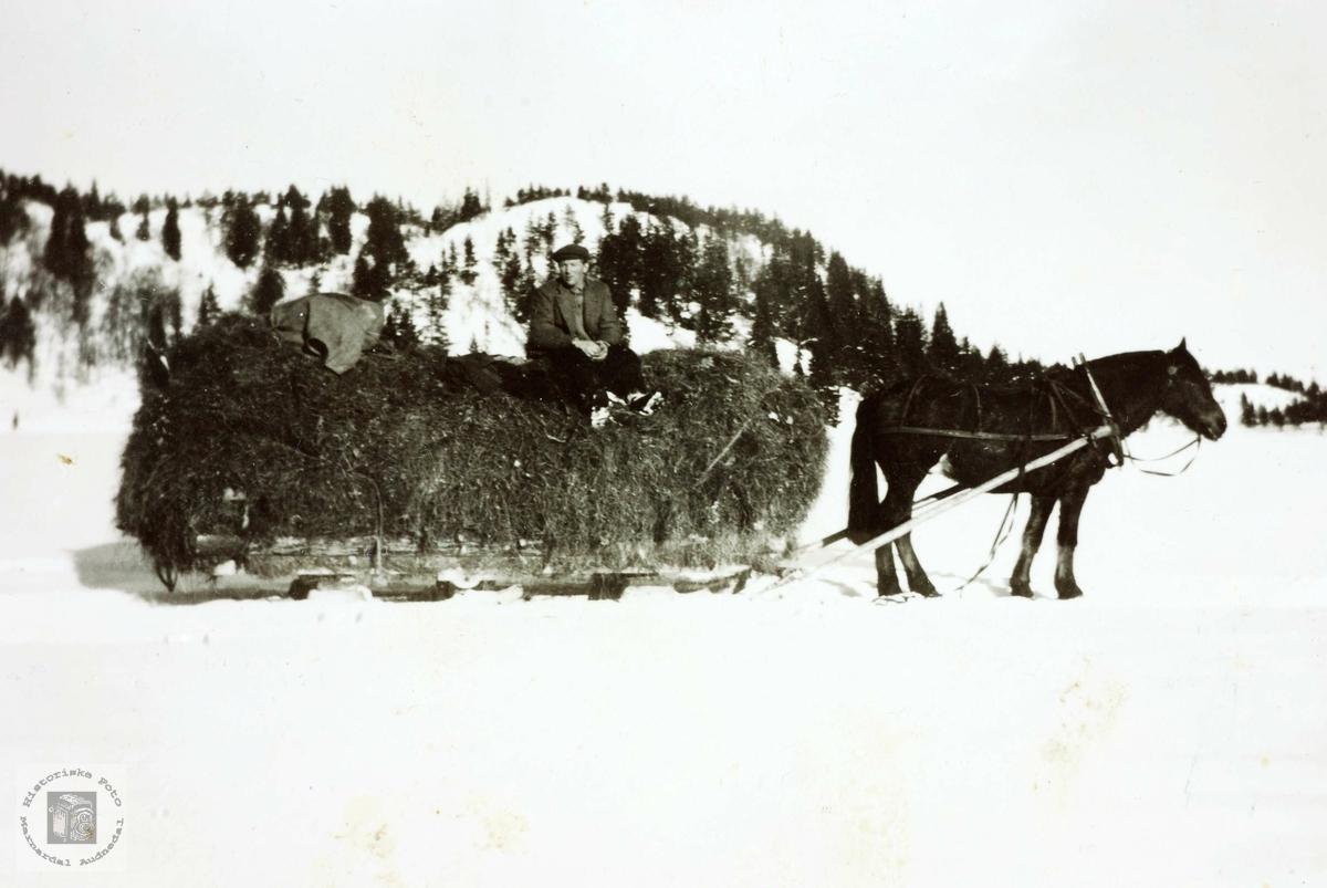 Hest og kjørekar tar en hvil på Vaslandsvatnet. Grindheim Audnedal.