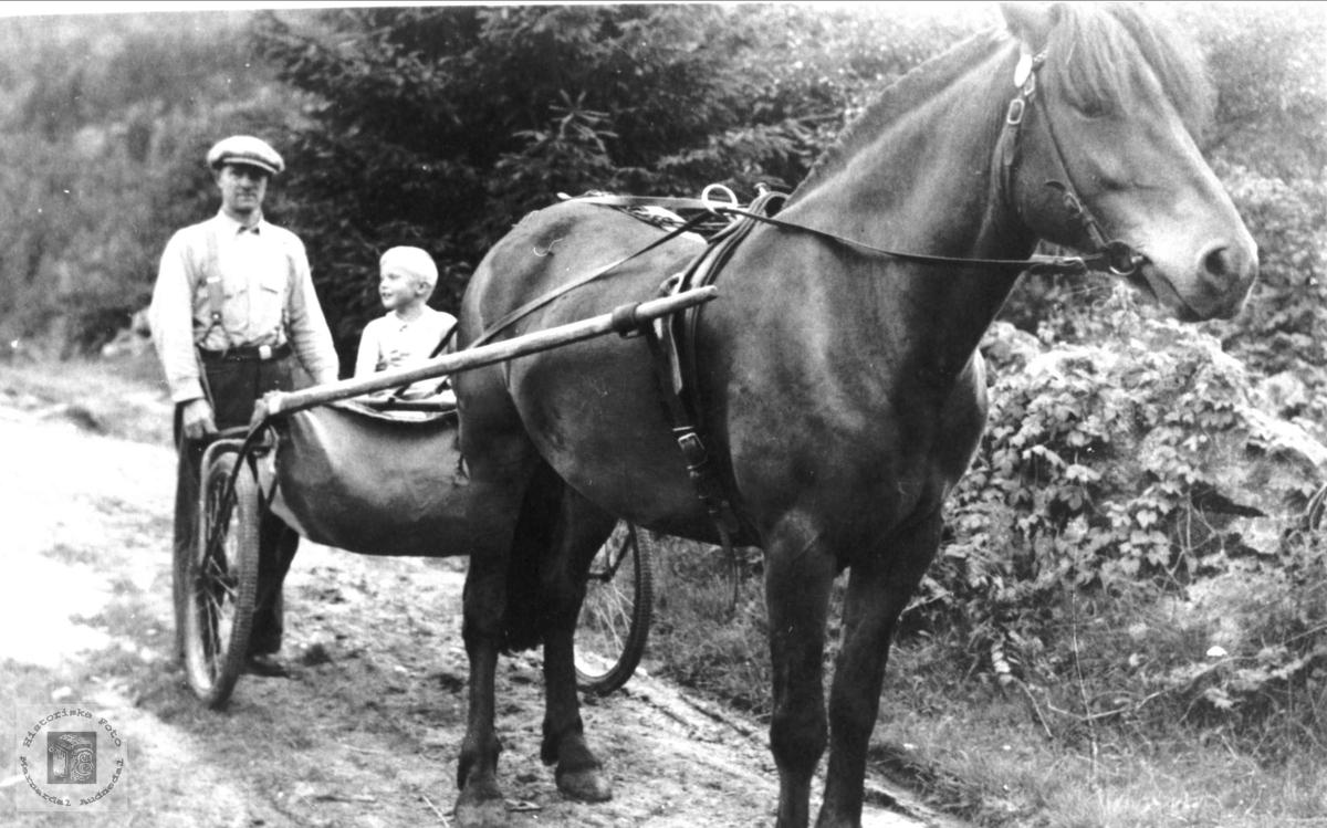 Magnus Homme med hest og sulky, Bjelland.