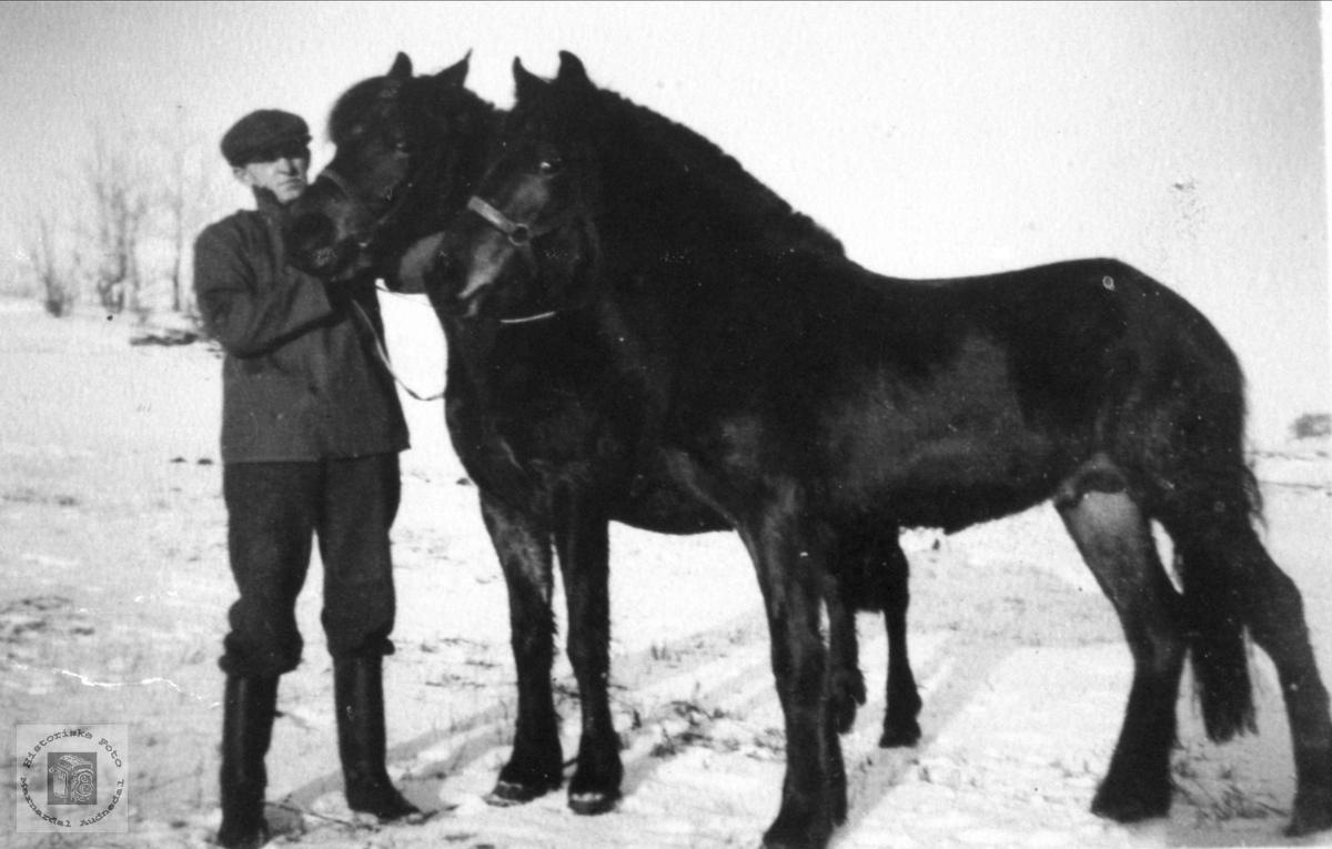 Portrett av Ingemann Lindland og hester Vollen, Lindland, Laudal.