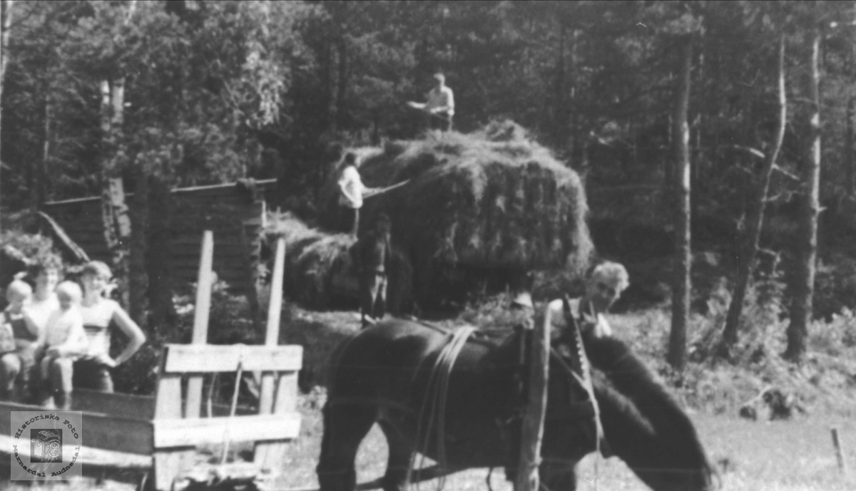Høyonn med hest og lastebil. Høye Øyslebø.