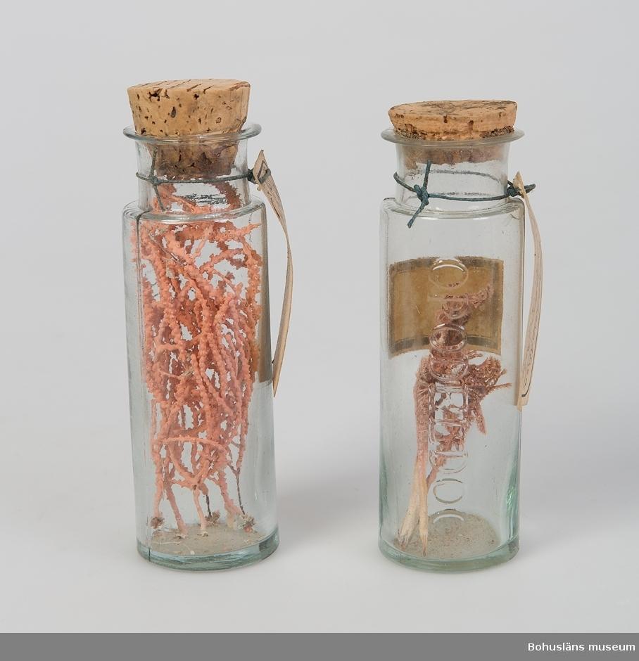 """Bohuslänska evertebrater i glasburkar (pressglas). Ingår bland 47 glasburkar förslutna med naturkorkar. Två olika höjder på burkarna 11,7 respektive 9,4 cm. """"OPODELDOC"""" ingjutet i glaset. Puntelmärke finns i botten. Fastklistrade pappersetiketter kombinerat med påknutna pappersetiketter innehåller uppgifter om vad som gömmer sig i burkarna. En glasburk med metallock innehåller ett torrt preparat – snäckor och sand. Locket har texten: Créme a la duchesse – Violet parf. A Paris."""