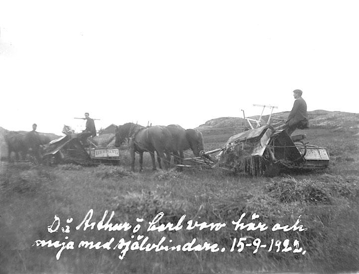 Då Arthur och Carl voro här och meja med självbindaren 15 sept. 1922