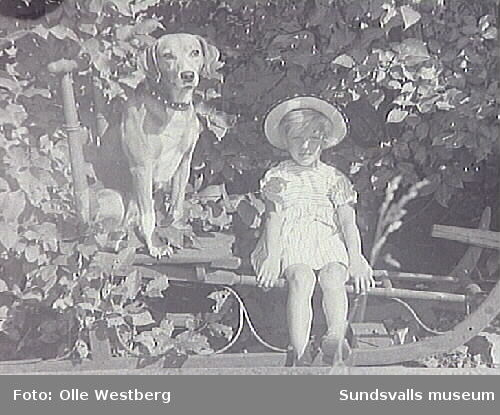 Hunden Prinsen och Britt-Marie Westberg, dotter till Linnea och Olle Westberg, sittande på en spark.
