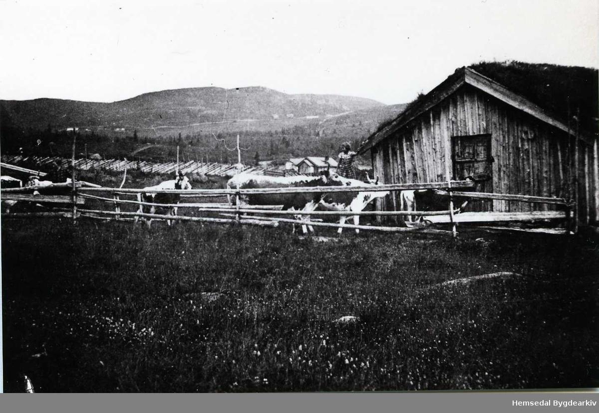Flatastølen som ligg i området til Eikrestølane i Hemsedal.