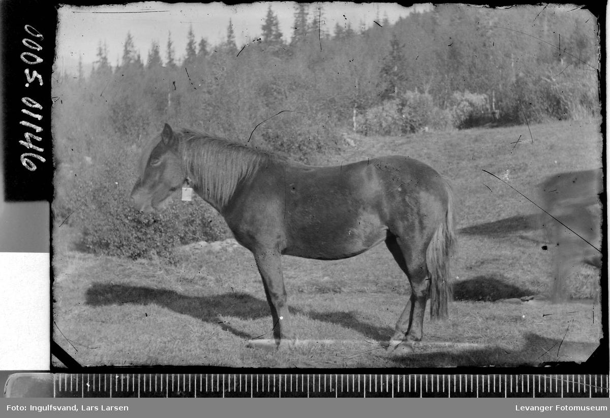 En hest.
