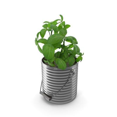 AM130-37-basil_plant.G16.2k.jpg