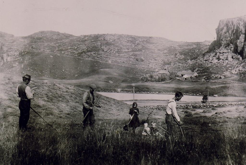 I slåtten i 1924. Husa på garden ser ein over vatnet i nordvest. Frå venstre Ola, Børge, Sigborg, Judit , Olav Sigurd og Olav.