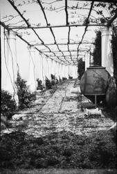 Drottning Victoria bilder. Vinodling. Villa San Michele, Cap