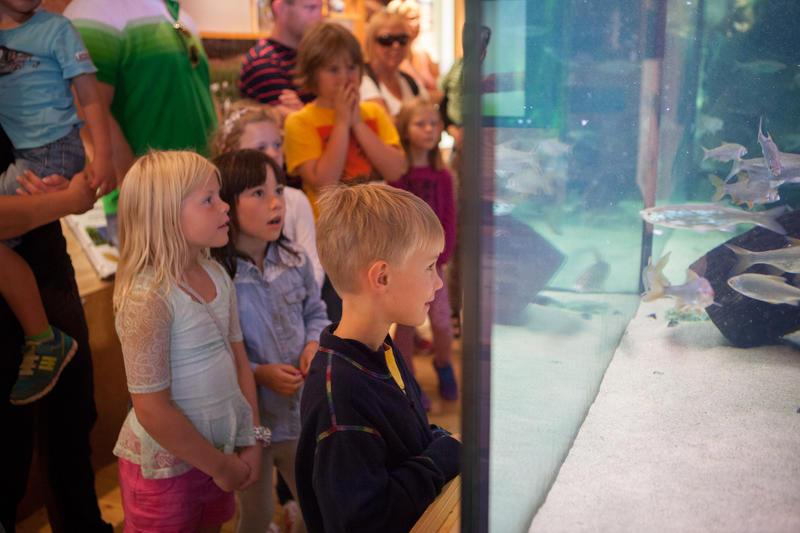 Foto av barn som ser på fiskene i akvariet (Foto/Photo)