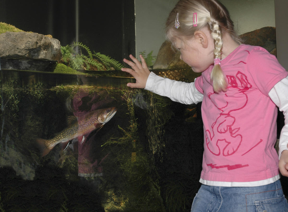 Mari ser på ørret i akvariet 12/4 2005.