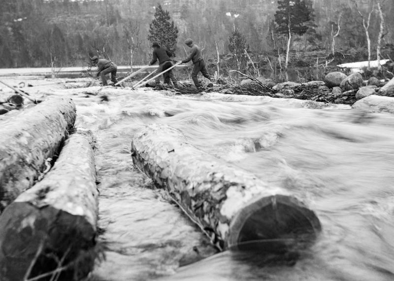 Tømmerfløting i Elgåa