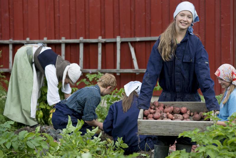en gruppe ungdom tar opp poteter i Friluftsmuseet (Foto/Photo)